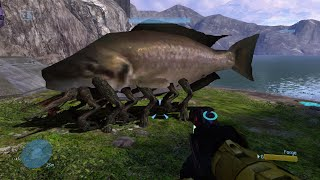 Halo 3 - Fish Infected By The Flood