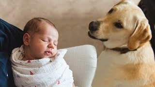 Dog Meeting Baby for the First Time Compilation