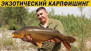 Карповая рыбалка в израиле