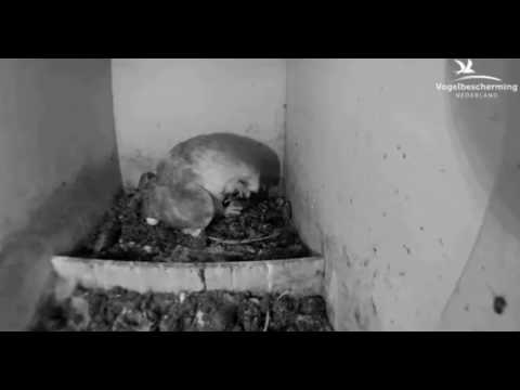 Vrouw eet prooi - 22 april 2017
