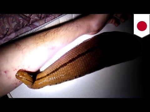 Magandang tablet mula sa mga worm na tao