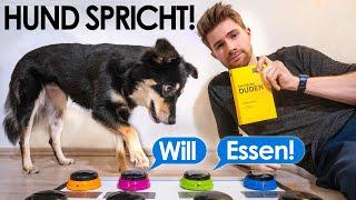 Ich bringe meinem Hund sprechen bei | Ein Experiment