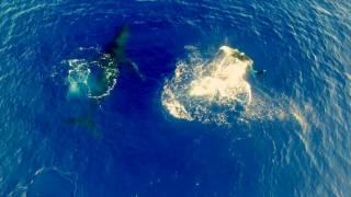 今シーズン初クジラの目撃 ラロトンガ島ザトウクジラシーズン到来