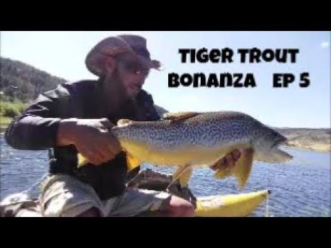 Tiger Trout Bonanza Episode 5