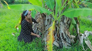 Yummy Banana Tree Soup Cooking - Find Banana Tree For Soup - Cooking With Sros