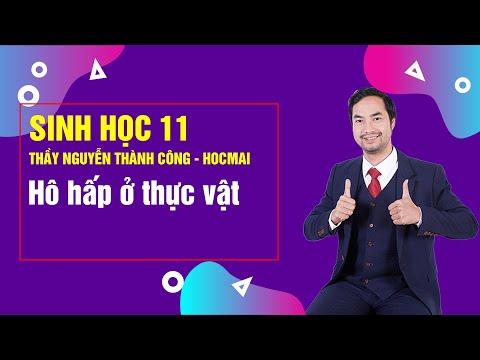 Bài Giảng Hô hấp ở thực vật - Lớp 11 - Thầy Nguyễn Thành Công - Khóa Học Tốt 11 2020