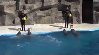 ულამაზესი კადრები ბათუმის დელფინარიუმიდან!!!