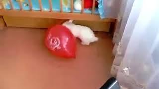 Прикол, у кролика бомбануло