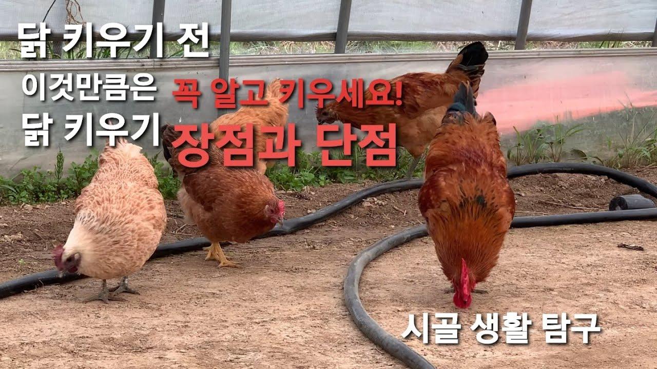 닭기르기 장.단점