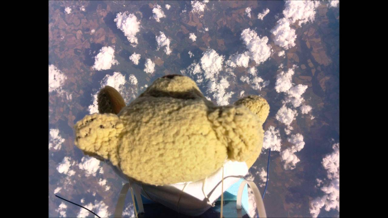 A Teddy Bear Is Your New World Skydiving Champion
