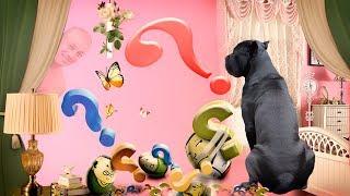 Собака Кане Корсо и странная шторка #canecorso