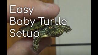 How To Setup a Turtle Aquarium (Baby Turtle!)