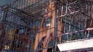 preview picture of video 'Animal Abuse in Indonesia - Pasar Burung Market in Denpasar - Bali (Bird Market)'
