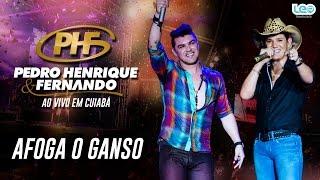 Afoga o ganso - Pedro Henrique e Fernando (Ao vivo em Cuiabá)