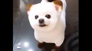 Cuty  Dogs  Compilation  かわいい イヌ たち