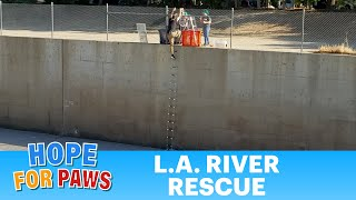 L.A. River rescue was unlike anything we've done before!