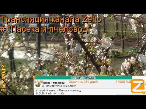 """Трансляция канала Zello """"Пасека и пчеловод"""". (Обзор за день) 24/04/2019"""
