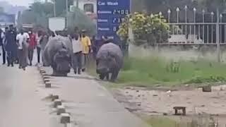 preview picture of video 'BURUNDI  BUJUMBURA : IMVUBU'