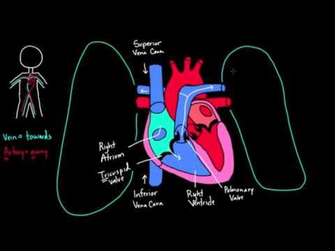 Klinika hipertensionit
