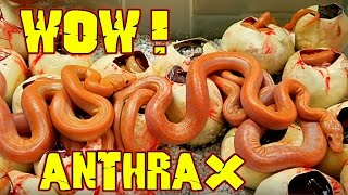 Anthrax Like We've Never Seen Before !