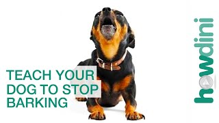 How to Teach Your Dog to Speak (and Stop Barking!)...