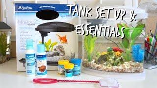 HOW TO SET UP A BETTA FISH TANK | ESSENTIALS