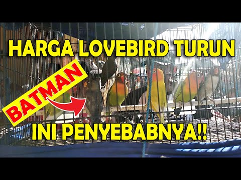 mp4 Lovebird Farm Pamekasan, download Lovebird Farm Pamekasan video klip Lovebird Farm Pamekasan