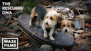 We Cried Tears of Joy Watching Reunion Between Boy & Dog After Tornado - Hope For Dogs | My DoDo