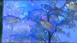 D Todo - Mercado de peces