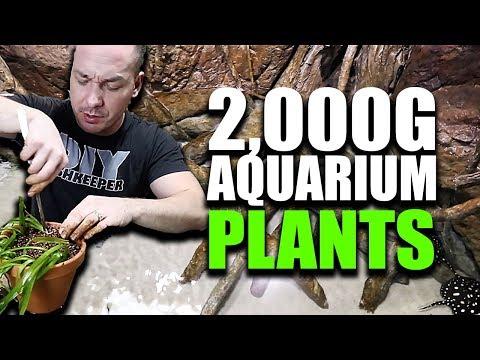 PLANTING THE 2,000G AQUARIUM part 1