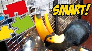 Toucan Solves a Puzzle For The First Time!!! (SMART BIRD!)