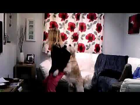 Dog attacks girl whilst dancing to One Diretion