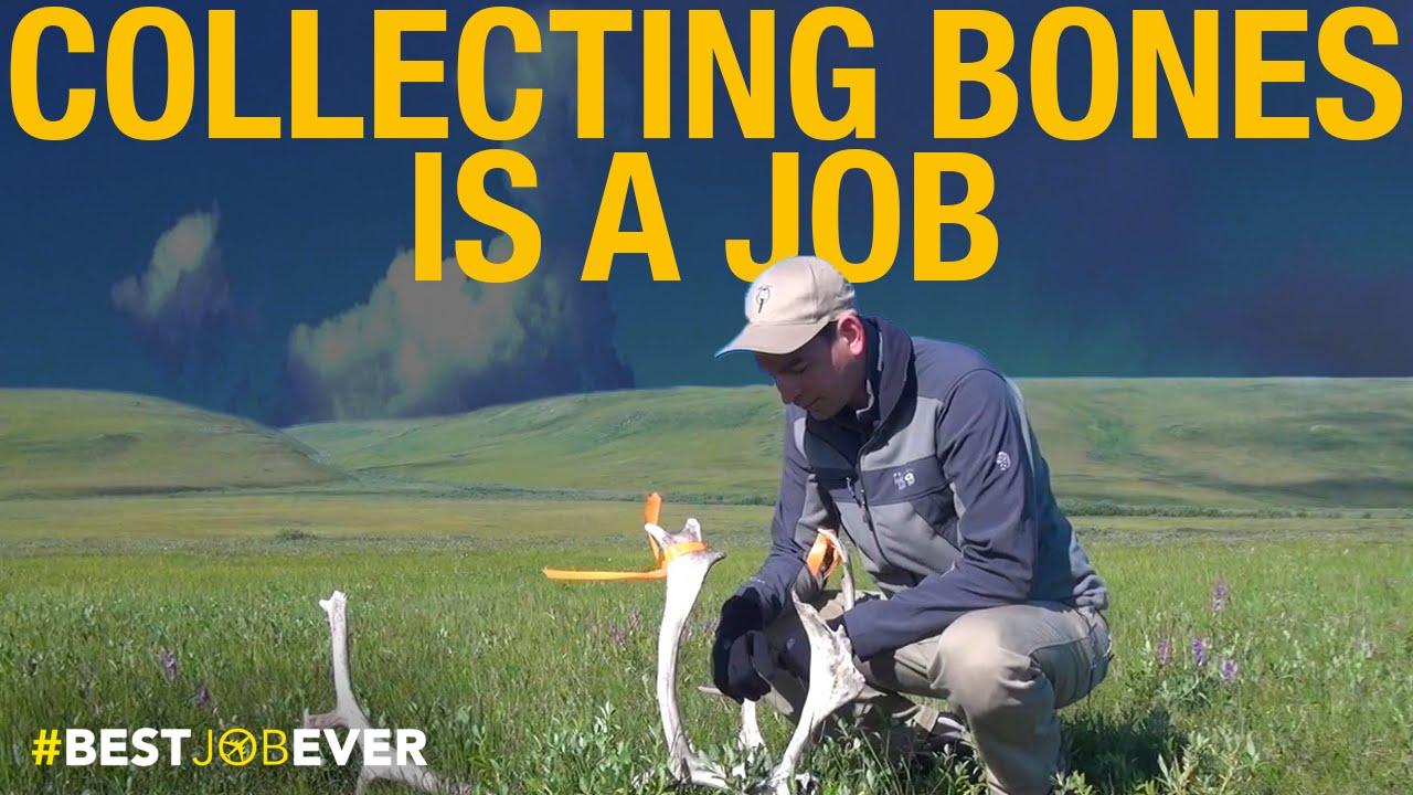Collecting Animal Bones in Alaska | Best Job Ever thumbnail