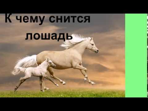К чему снится лошадь..Сонник от Ирины