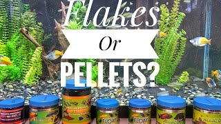 Feeding Fish: Flakes Or Pellets?