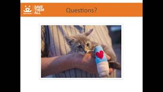 Million Cat Challenge Albuquerque Case Studies