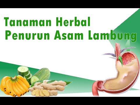 Video Ramuan Tanaman Herbal Penurun Asam Lambung