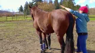 Pelvic Stretch For Your Horse