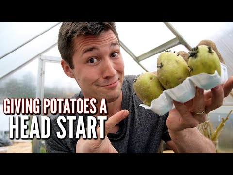 , title : 'How to Sprout Potatoes Before Planting to get a HEAD START!