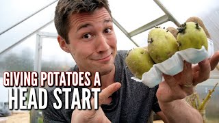 How to Sprout Potatoes Before Planting to get a HEAD START!