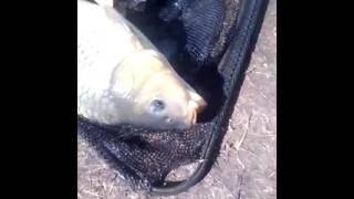 Платная рыбалка барынино рузский район