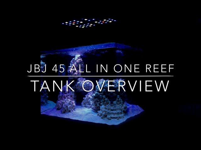 JBJ 45 All In One Reef: Tank Overview