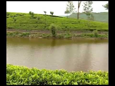 Ceylon Tea - Sri Lanka's Gift to the World.