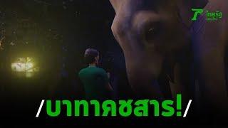 ช้างตกมัน กระทืบหนุ่มสมองเละ | 26-01-63 | ไทยรัฐนิวส์โชว์