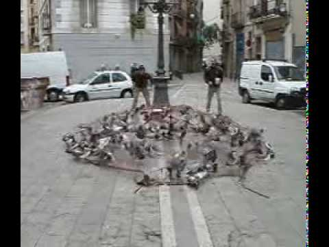 Watch A Ton Of Pigeons Being Trapped By A Catapulted Net