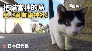 把貓當神的田代島,島上竟有貓神社!【狸貓】