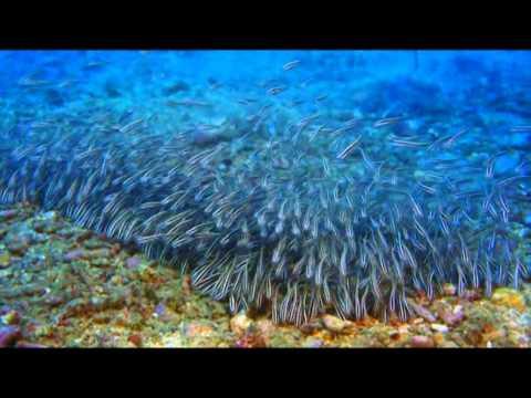 IMAX тайны подводного мира