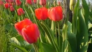 Floriile, Versuri:Vasile Alecsandri