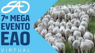 MEGA LOTE 15 TOUROS NELORE PO