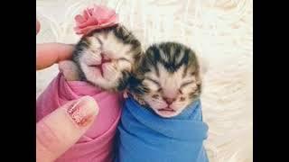 Kittens in the studio